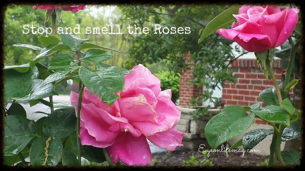 stop and smell the roses eyeonlifemag.jpg