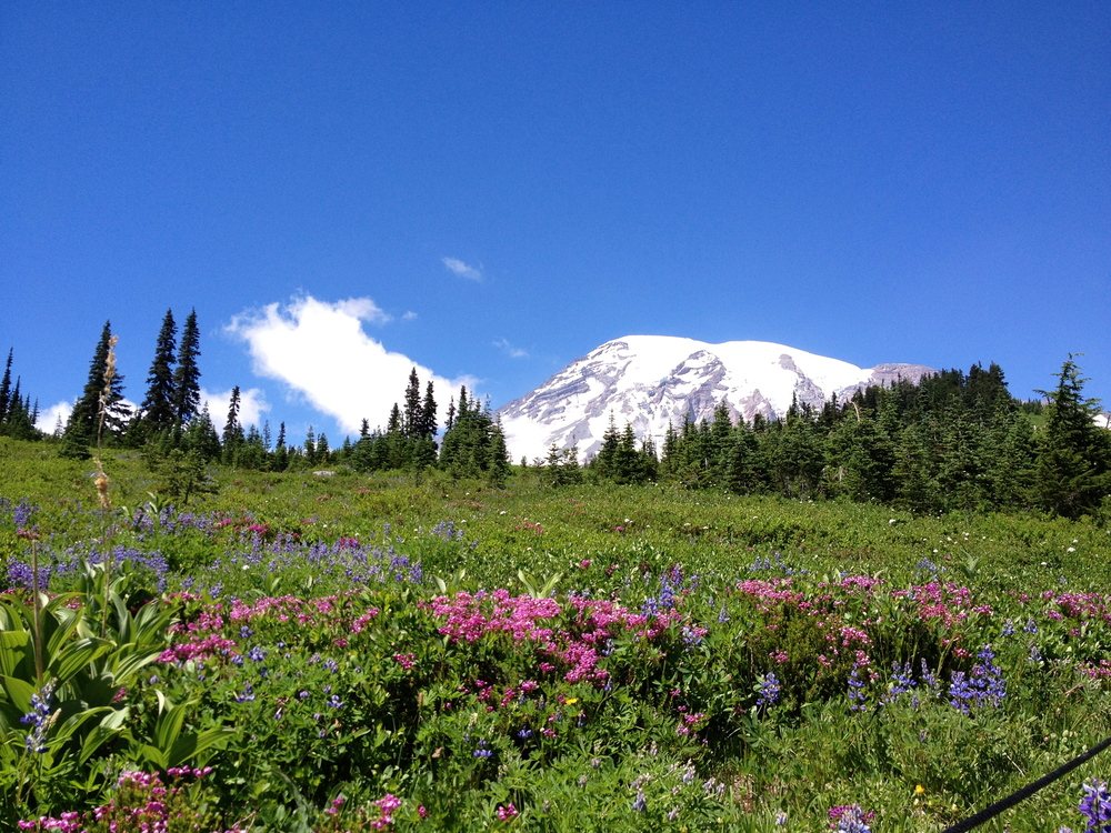 Wildflowers and Mt. Rainier