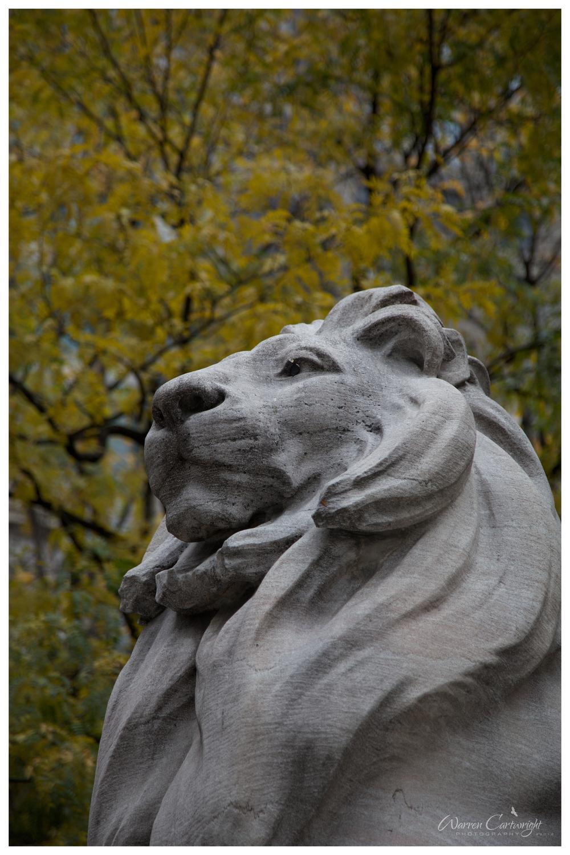 nyc_lion.jpg