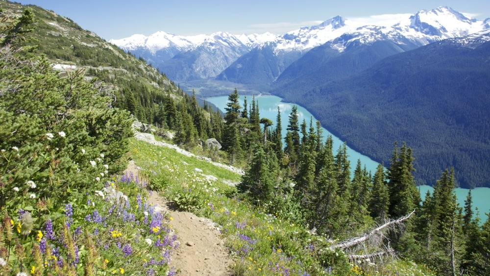 Wildflowers frame the trail as you overlook Cheakamus Lake. A breathtaking scene.