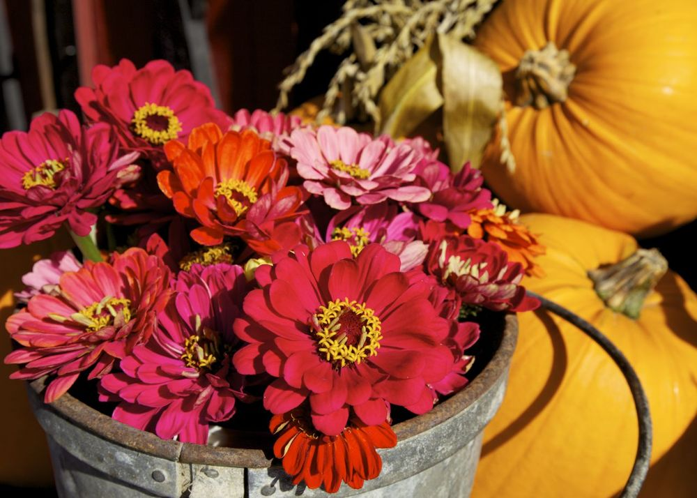 Flowers, pumpkins and old buckets; a perfect look for the fall season.