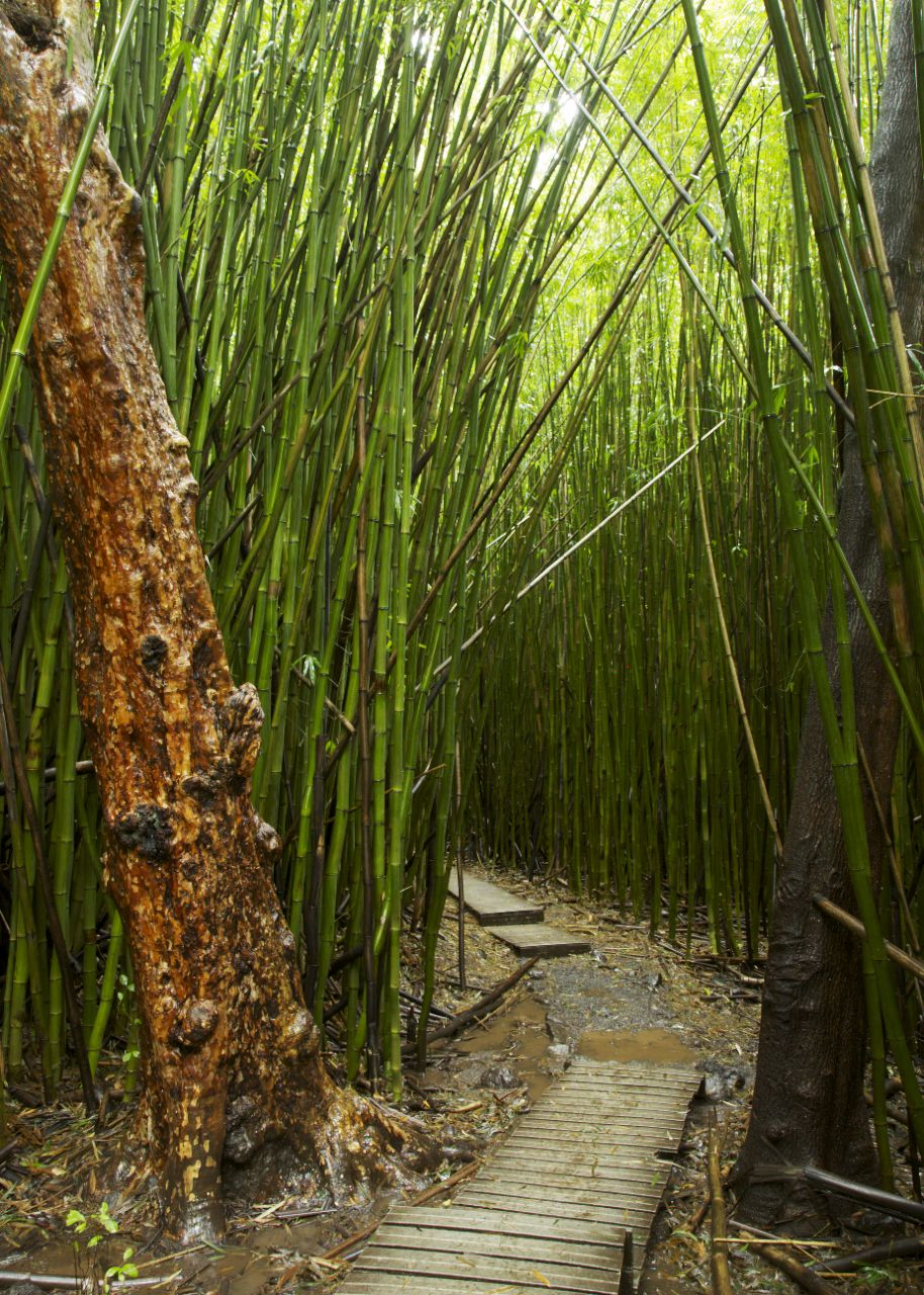 The bamboo forest had great boardwalks through most of it, which were needed as the ground would have been a bog otherwise.