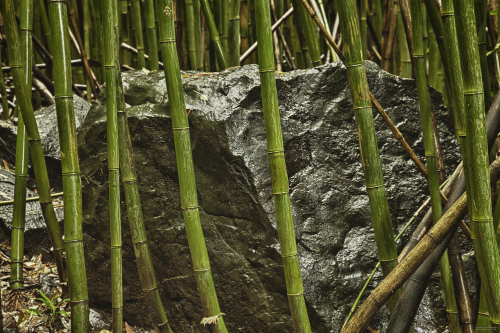 This massive rock was surrounded by the bamboo.