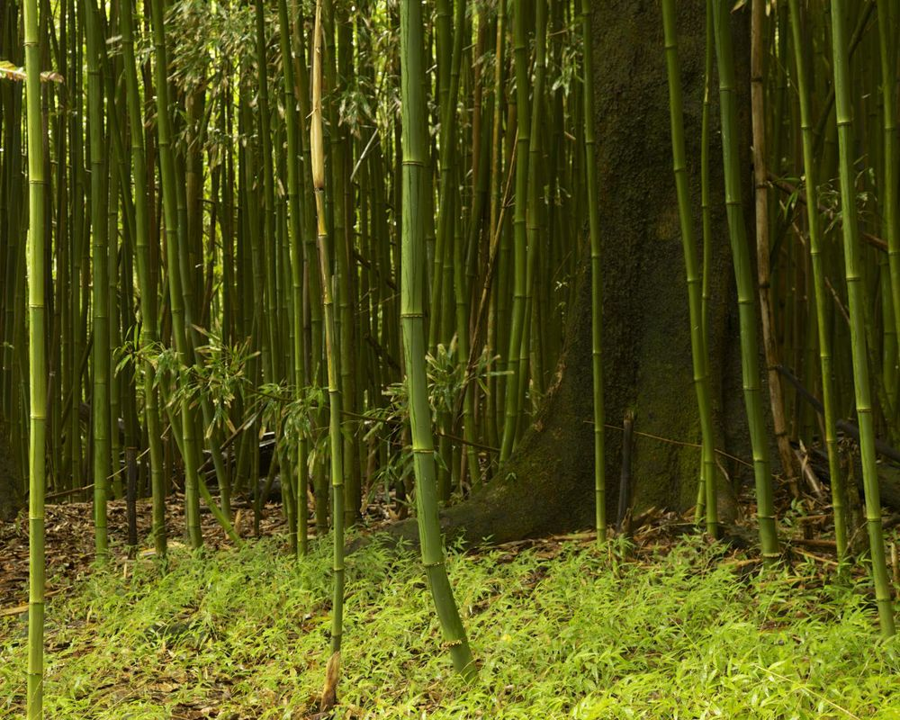 bamboo_stilllife.jpg