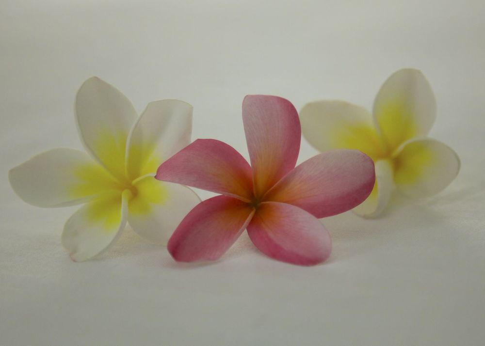 Maui_three_plumera.jpg