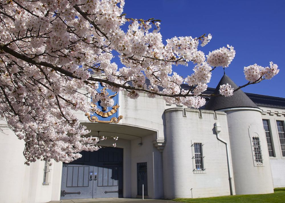 The armoury makes a great backdrop for the cherry trees in full bloom.
