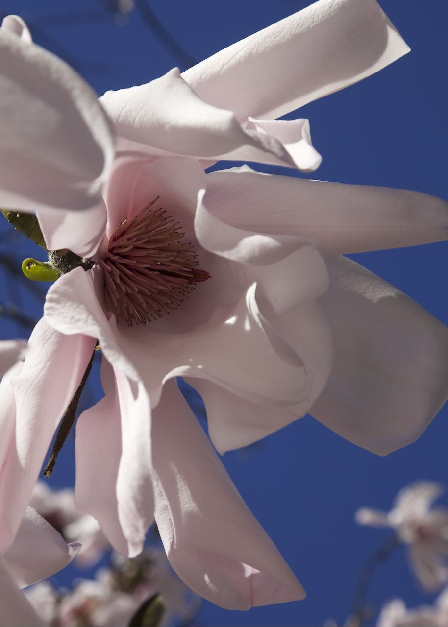 201303 Blossoms 94.jpg