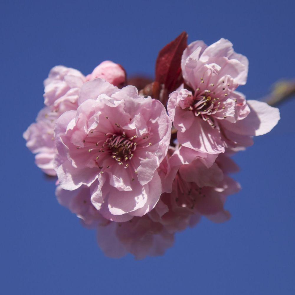 201303 Blossoms 58.jpg