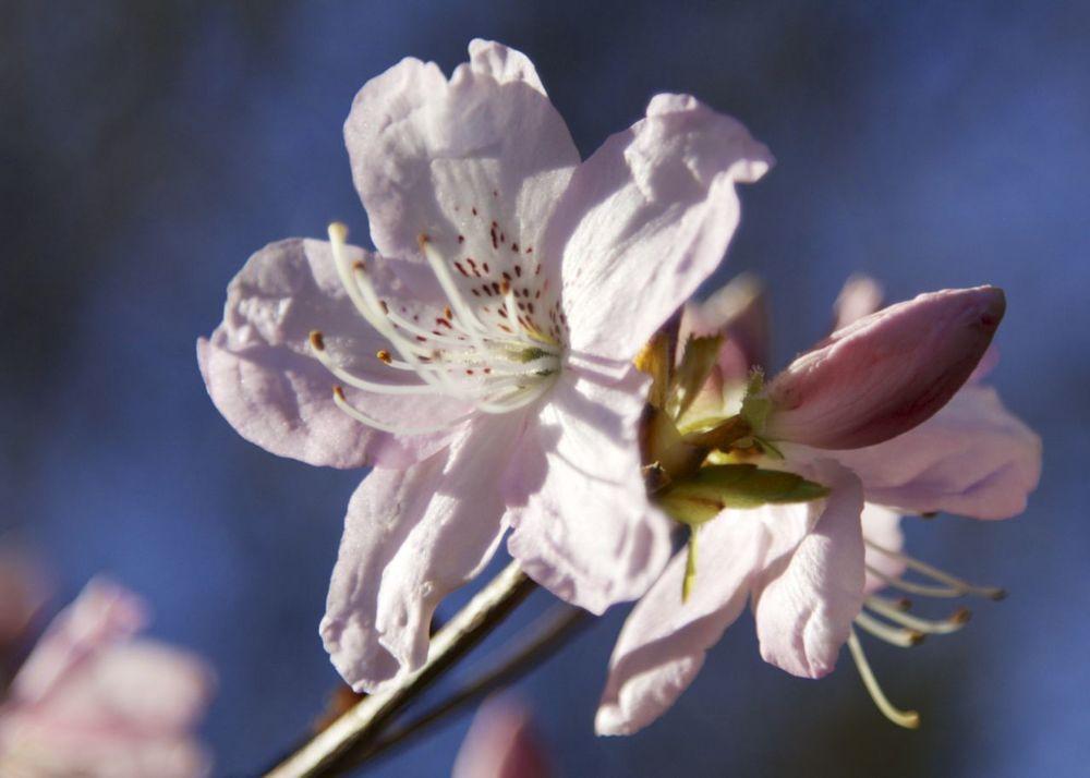 201303 Blossoms 119.jpg
