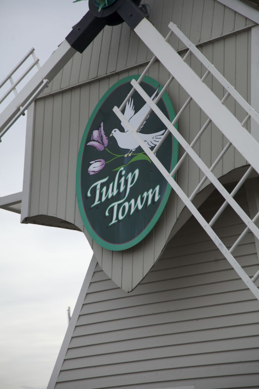 The windmill at Tulip Town.
