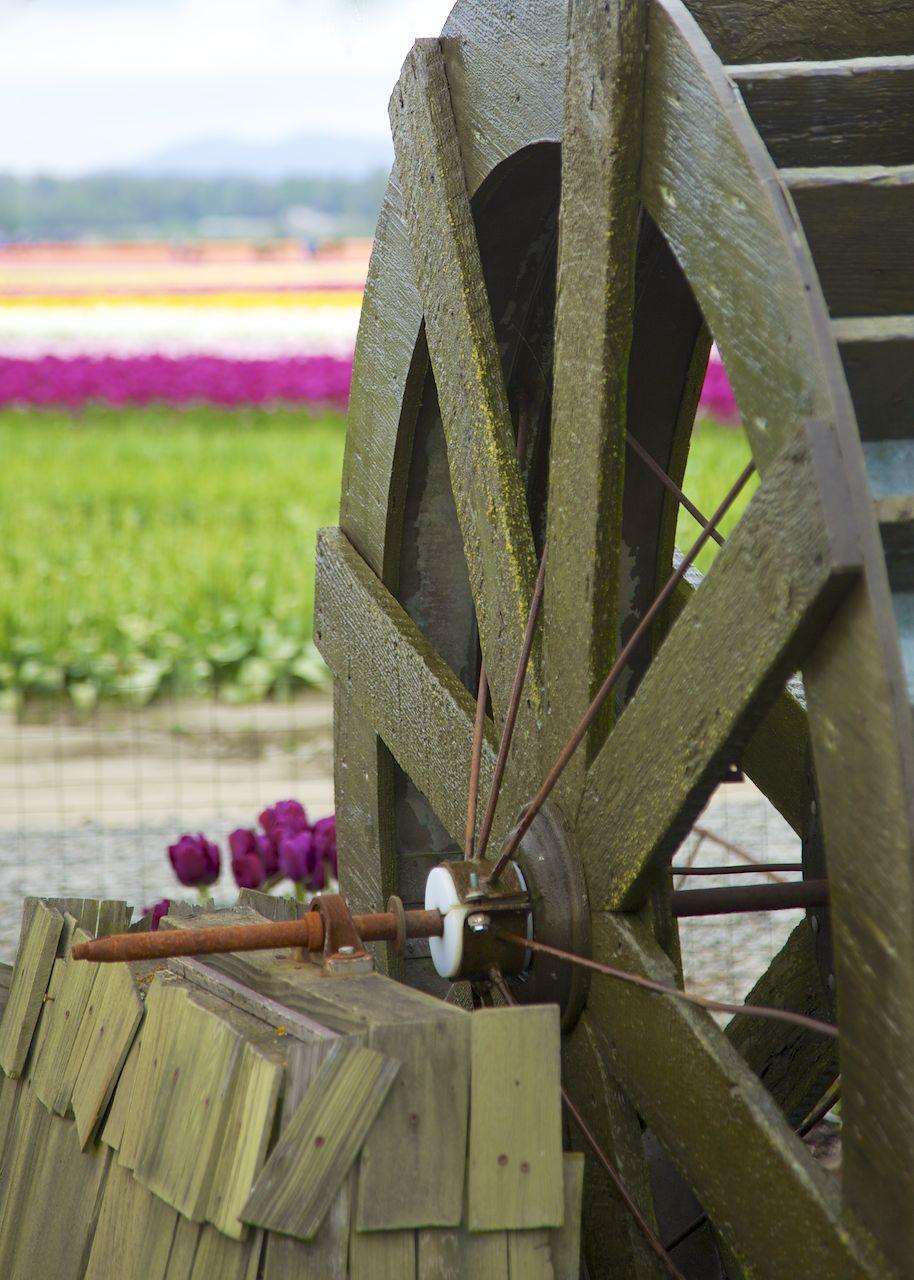 201204 Skagit Tulip Festival 151.jpg