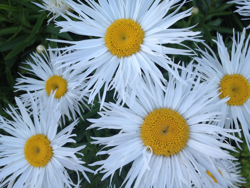 Some very interesting daisies.