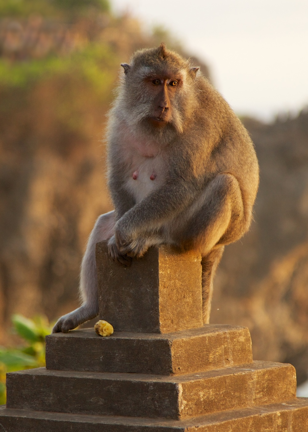 The monkeys were pretty entertaining. They do steal things from people, and there were attendants at the temple who's only job was to try and get back the items stolen by the monkeys.