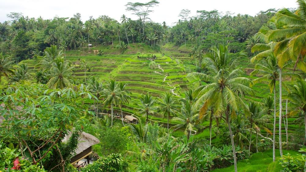 Bali  36233.jpg