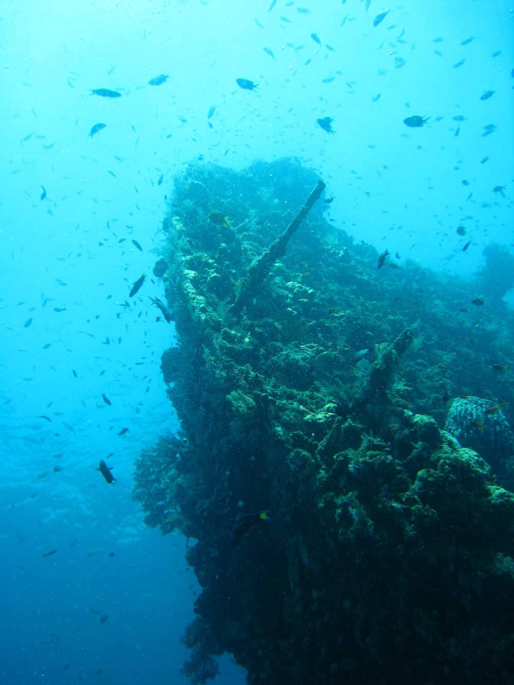 The superstructure of the Liberty, surrounded in the ample sea life.