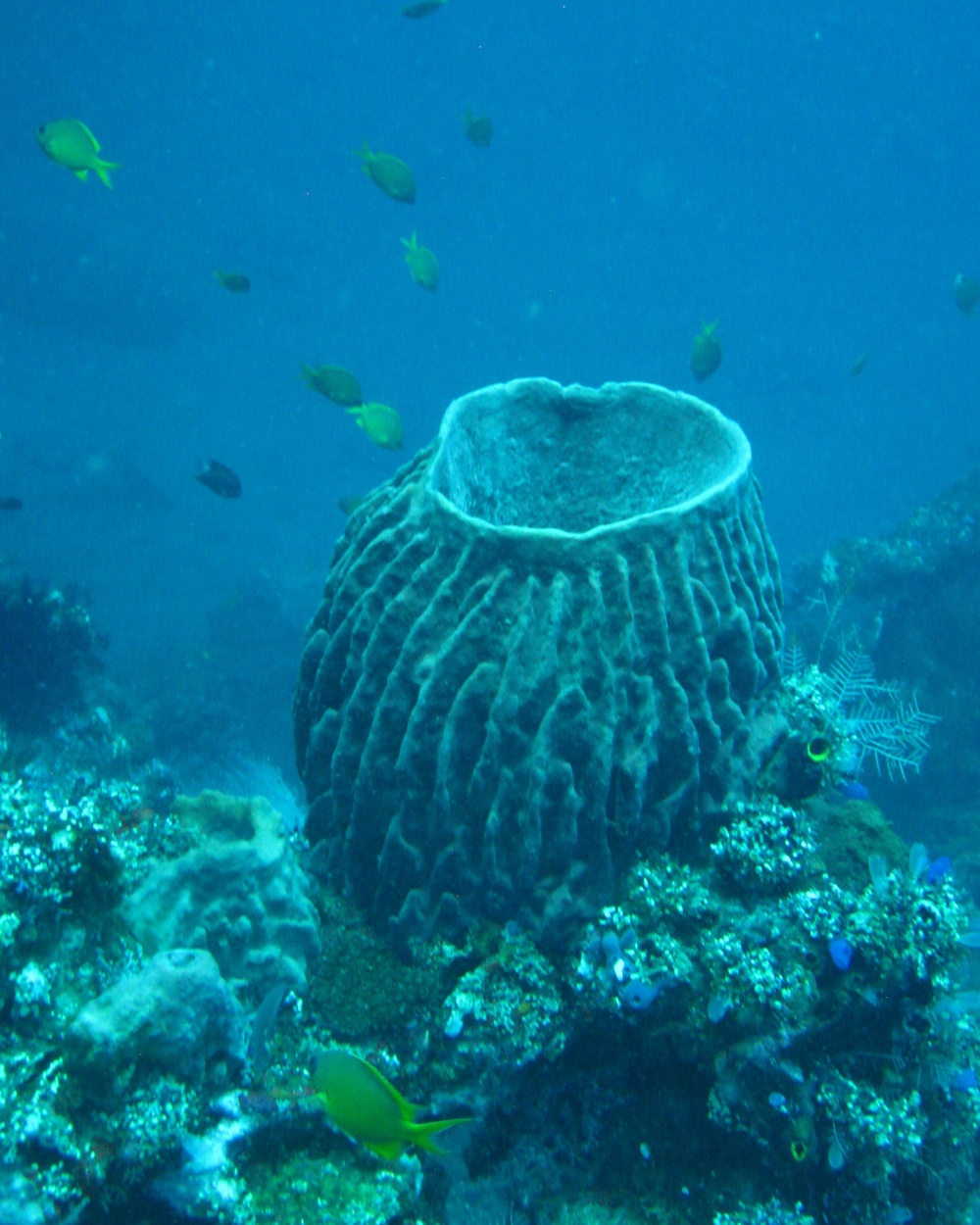 Bali  36307.jpg