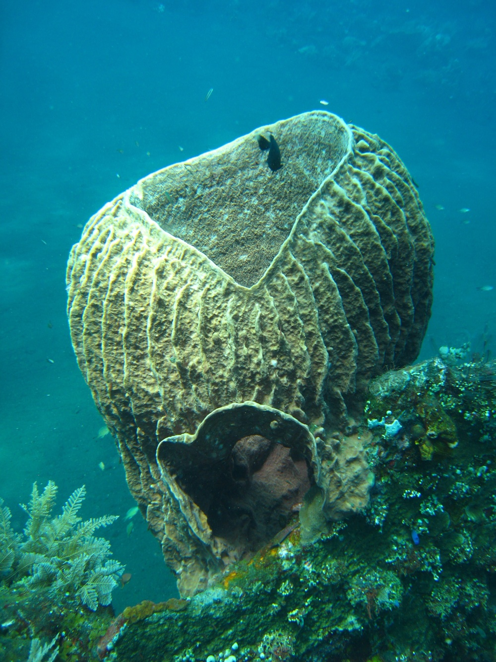 Bali  36312.jpg