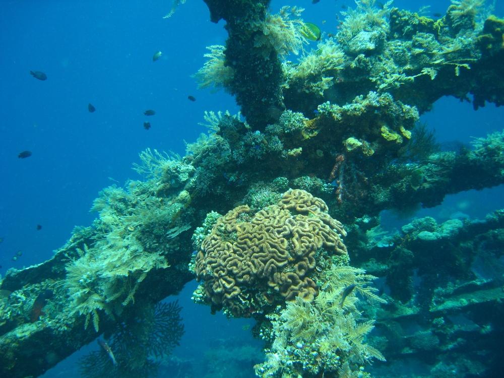 Bali  36318.jpg