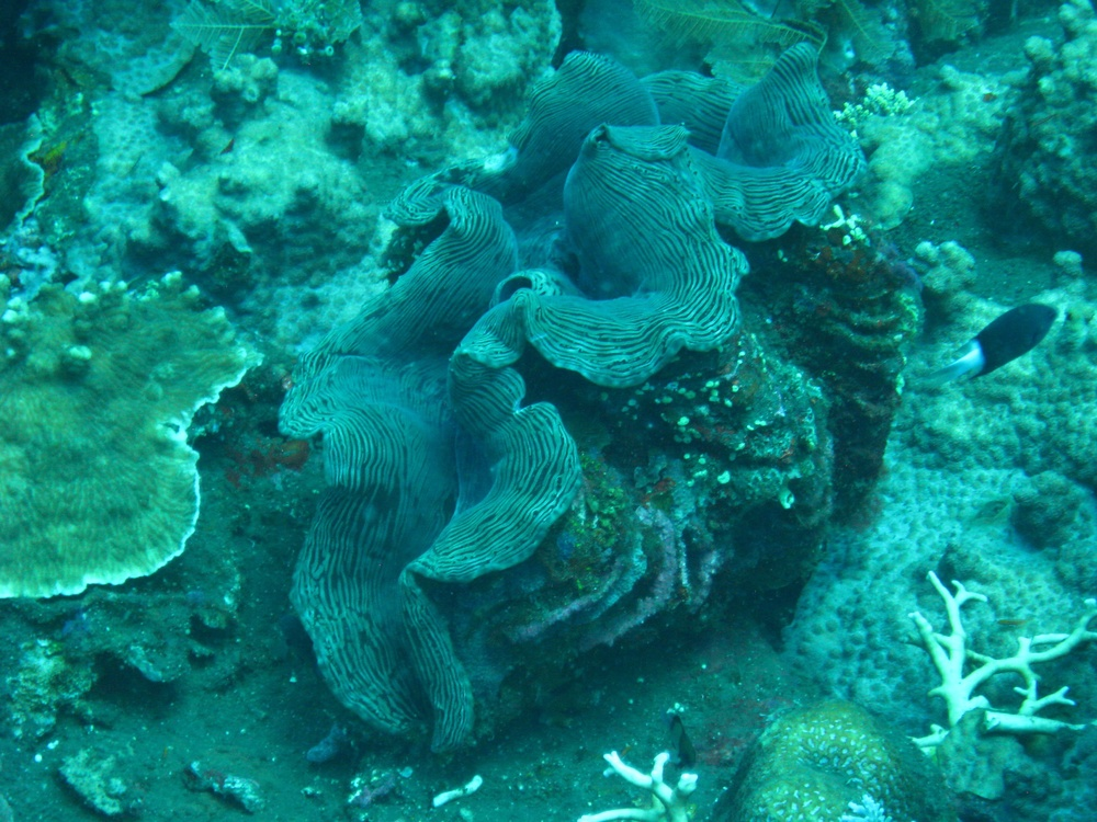 Bali  36335.jpg