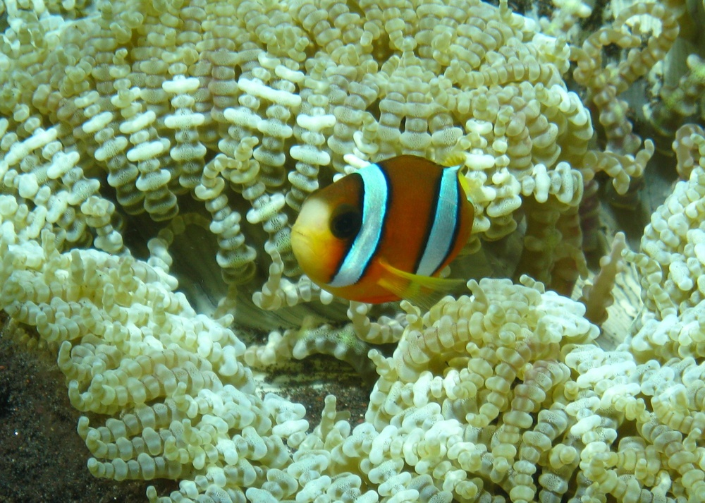 Bali  36345.jpg