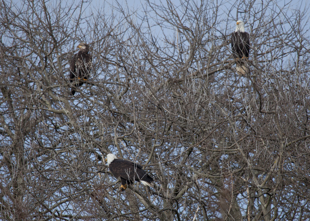 Eagle Tree!