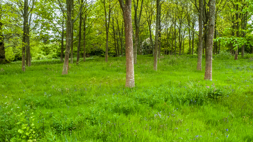 The spring had turned everything dazzling shades of green.