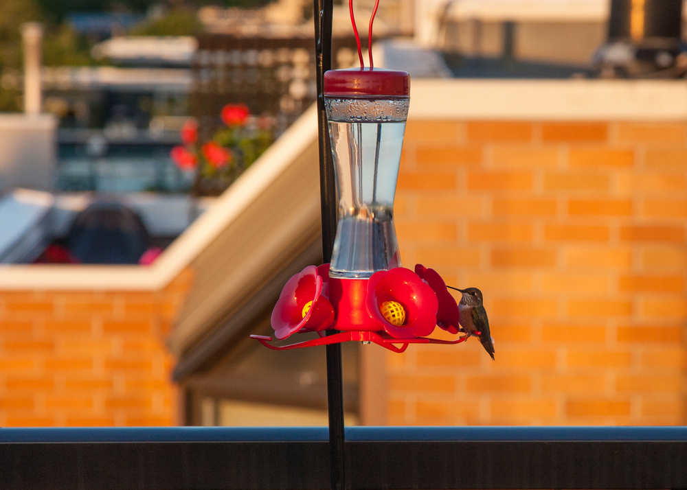 Shooting hummingbirds with a 24-105mm lens just doesn't work.