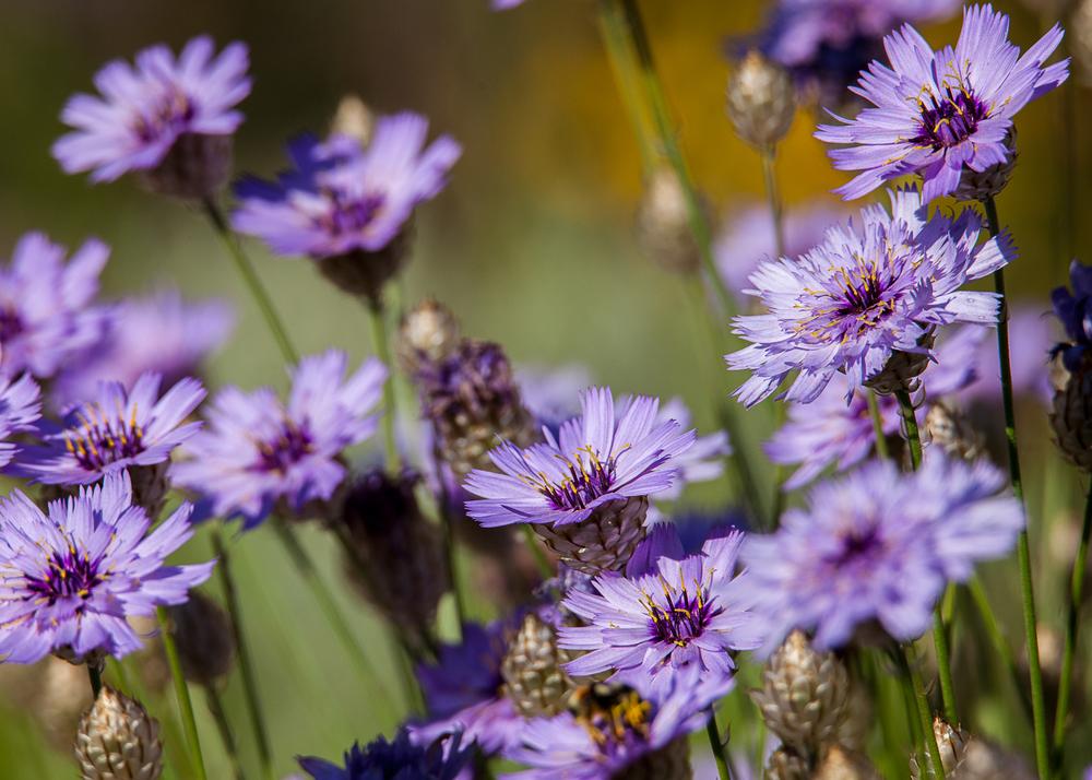 more_purple_flowers