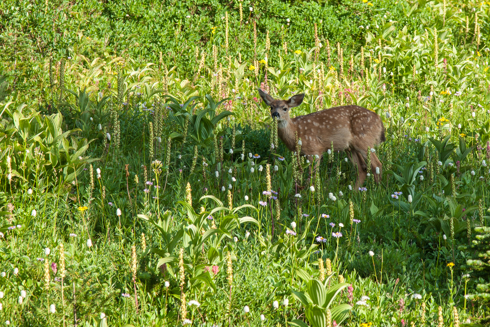 Even the little fawn wasn't too worried about us being near.