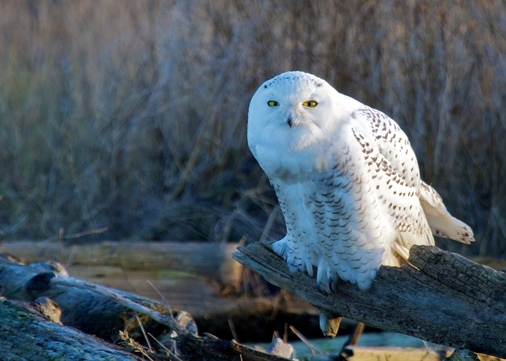Owls++27089-1673694022-O.jpg