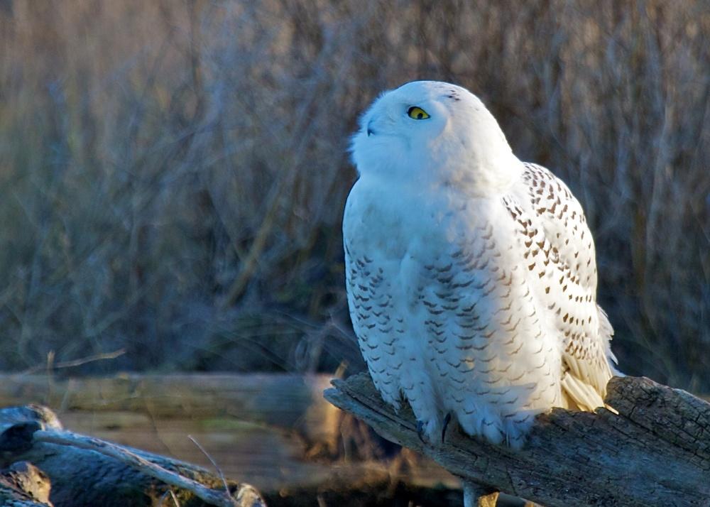 Owls++27102-1673693642-O.jpg