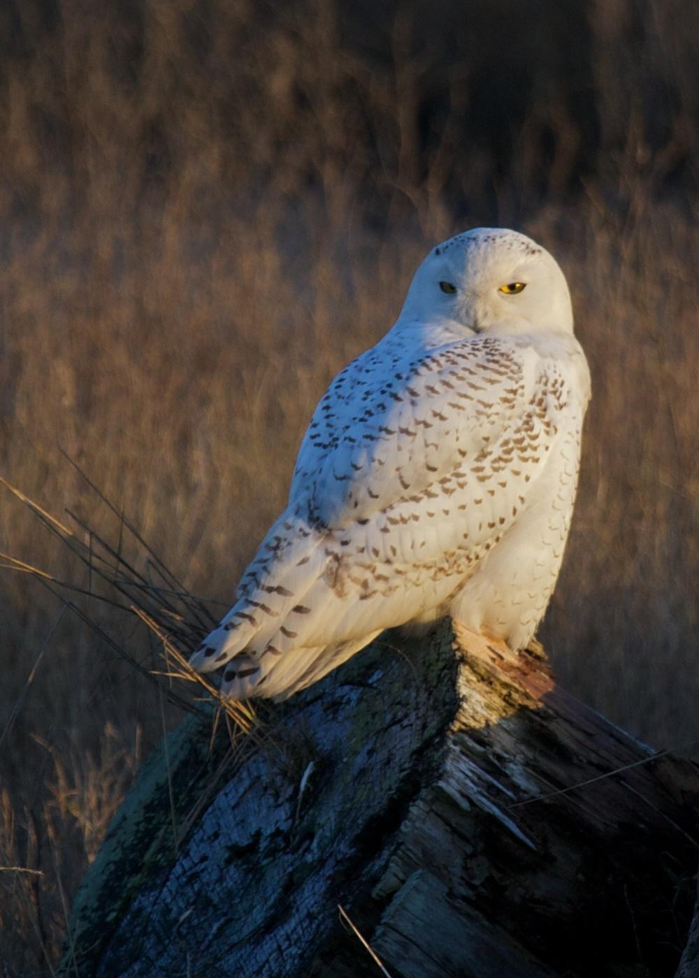 Owls++27134-1673691715-O.jpg