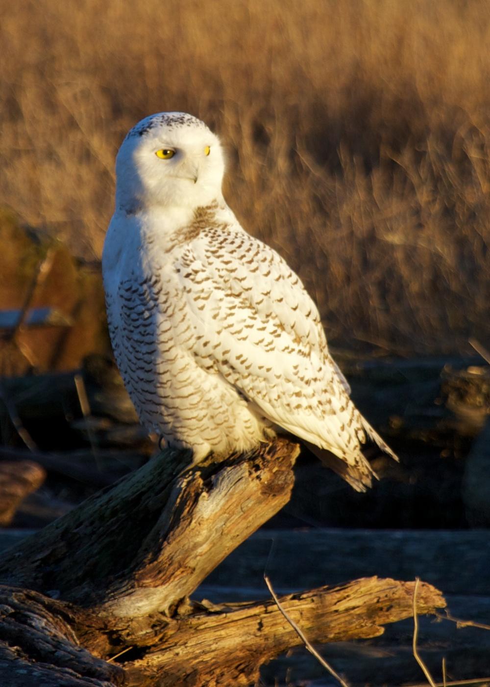 Owls++27158-1673692950-O.jpg