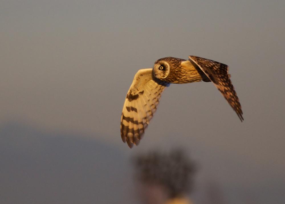 Owls++27176-1673692793-O.jpg