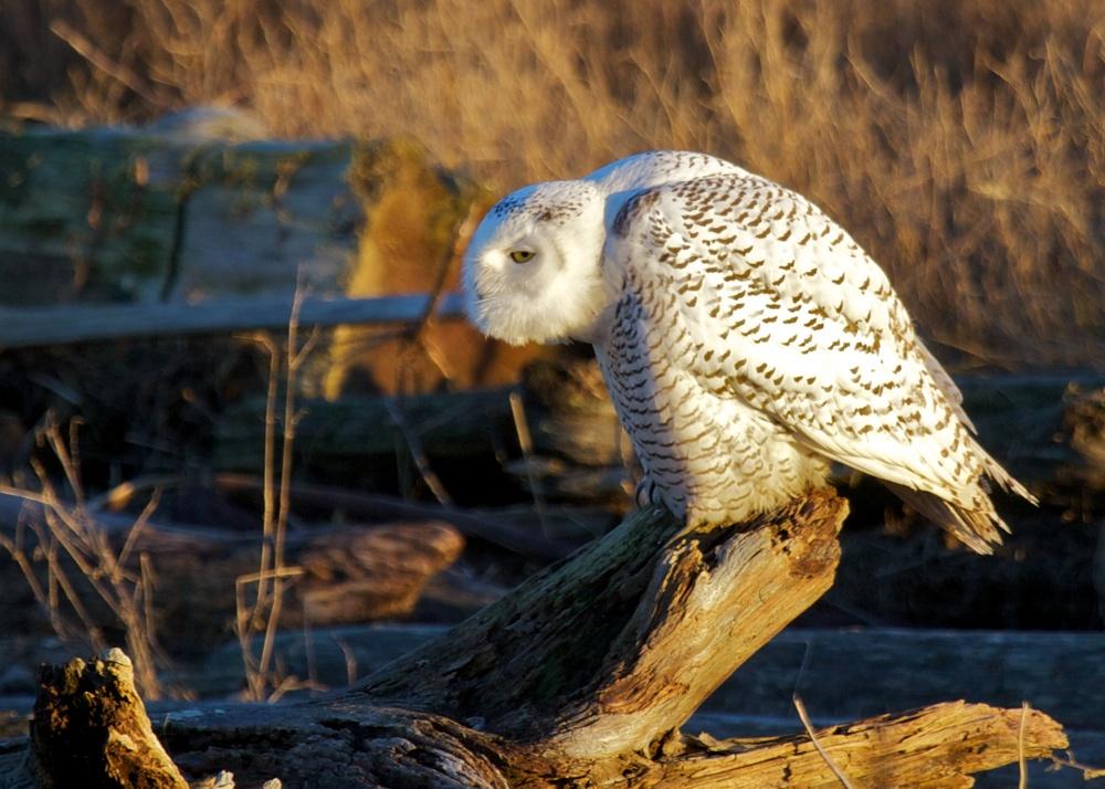 Owls++27161-1673691630-O.jpg