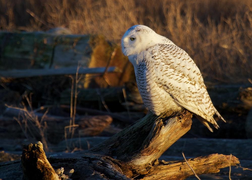 Owls++27177-1673692571-O.jpg
