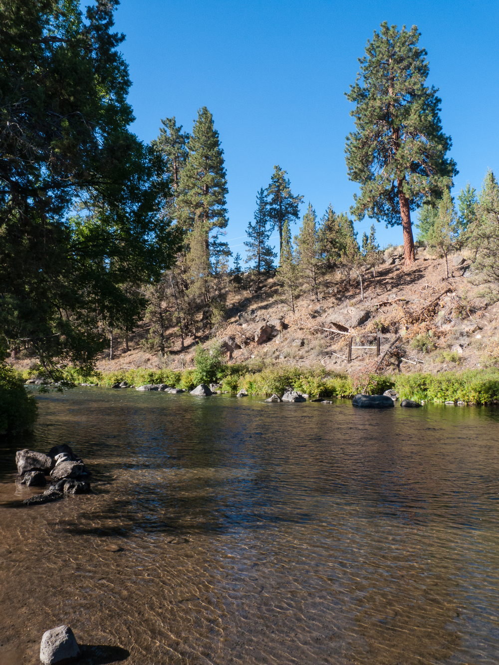 The Deschutes River runs through the park, and made for a very peaceful scene. We tried to swim, but it was really too shallow.
