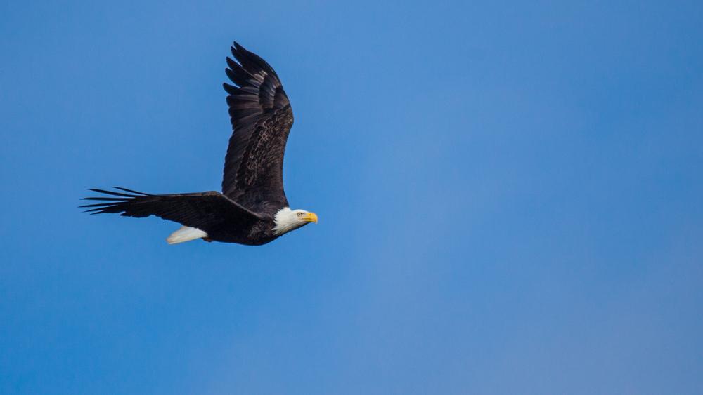 eagles-4.jpg