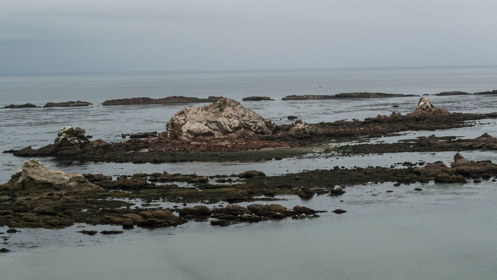 It's hard to see with this shot, but all the brown blogs are sea lions, hauled out on the rocks.