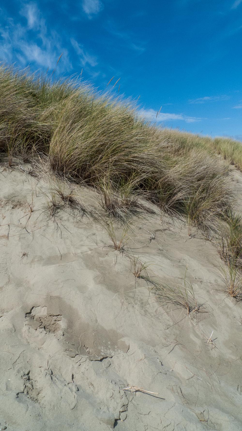 Coast-9.jpg