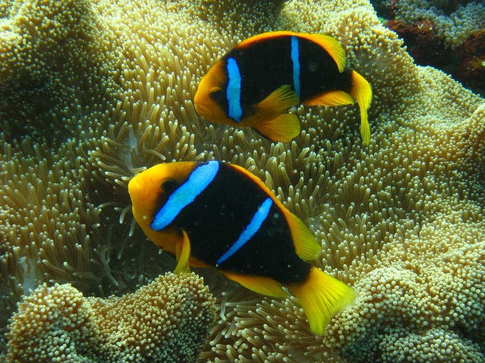 Fiji032009++2893+15-660174469-O.jpg