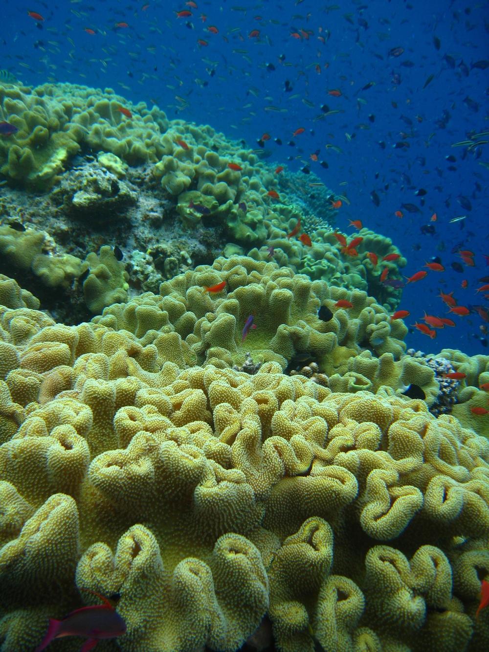 Fiji032009++3452+9-660171888-O.jpg