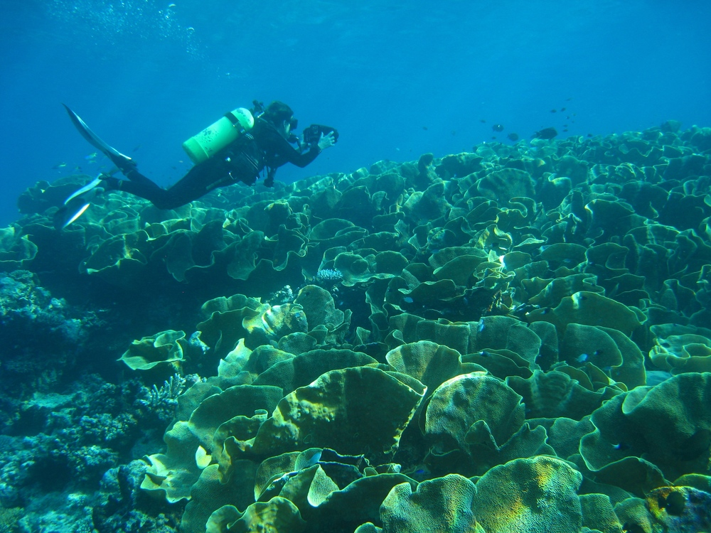 Fiji032009++3671+17-660175151-O.jpg