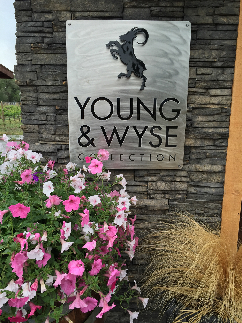 young and wyse logo