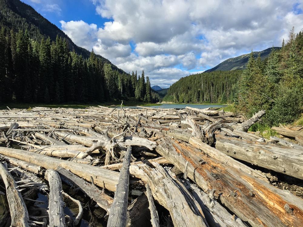 Yukon-8.jpg
