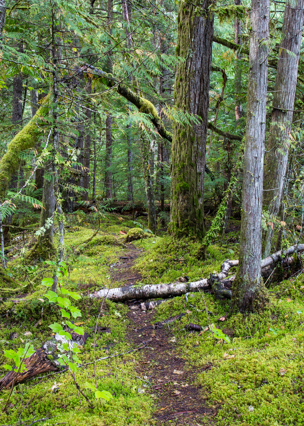 The path to Vetter Falls, through the moss-rich temperate rainforest.