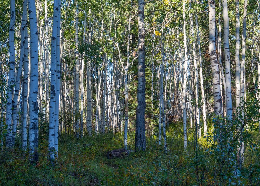 Yukon D5-23.jpg