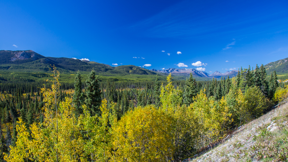 Fall colours in the Yukon