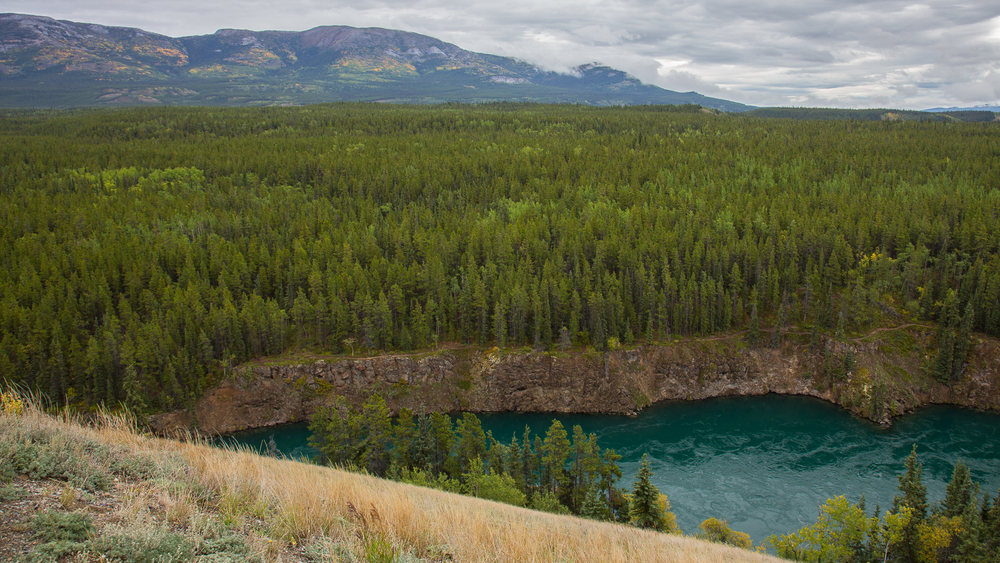 Miles Canyon, the Yukon river and the local mountains bursting with colour.