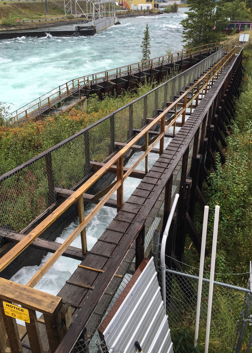 The Whitehorse fish ladder - supposedly the biggest in the world. It definitely travels a long way.